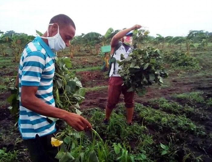 La agricultura cubana y sus retos ante la Tarea Ordenamiento