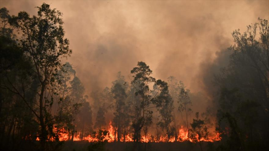 Unprecedented Crisis: Australia and its Raging Forest Fires