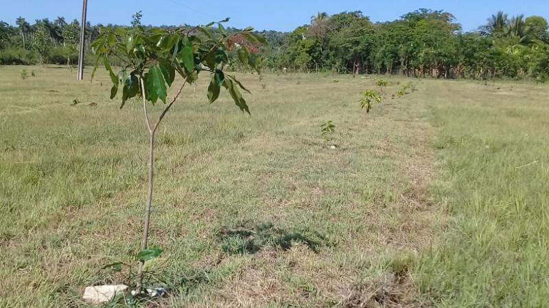 Protegen reservas naturales de Mayabeque