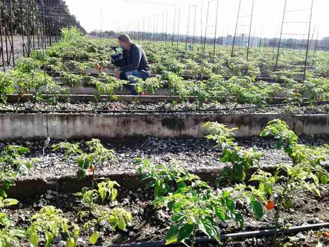 En Cienfuegos, a pesar del bloqueo, crean polos productivos y sustituyen importaciones (+Audio)