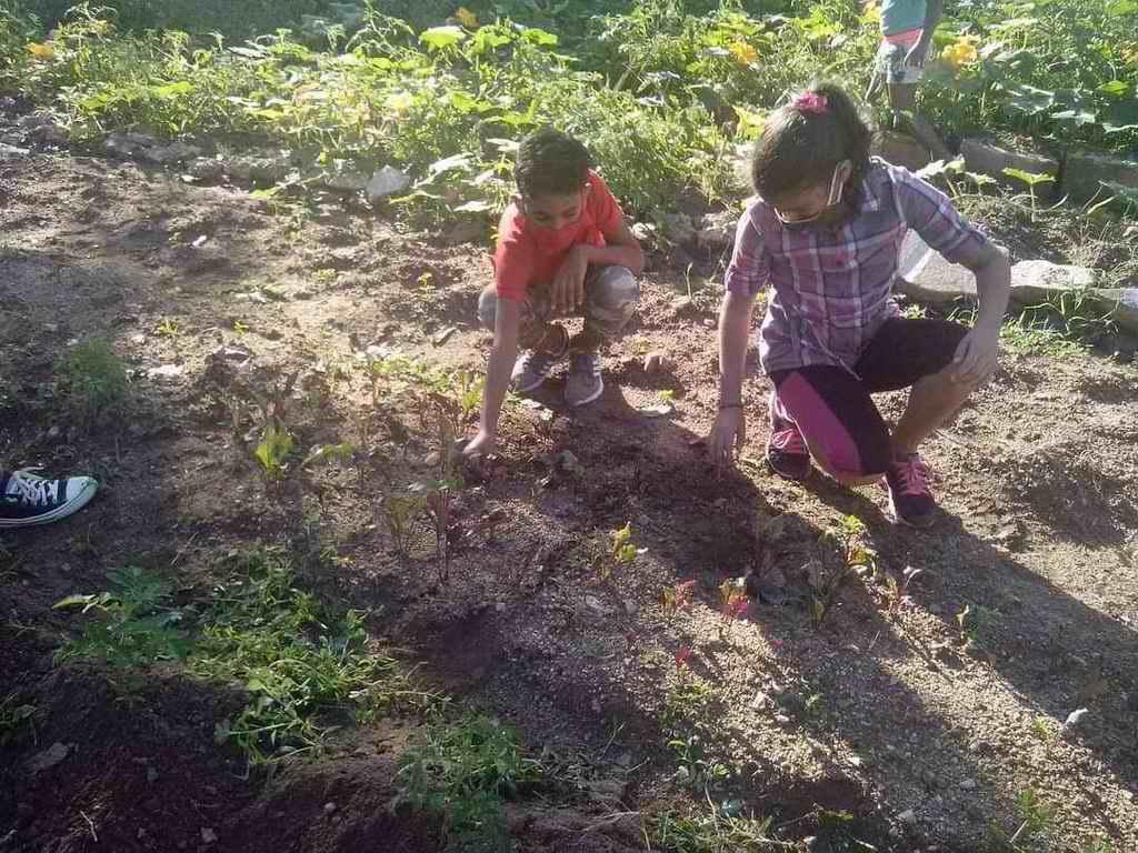 Centros educativos pineros aportan a la soberanía alimentaria