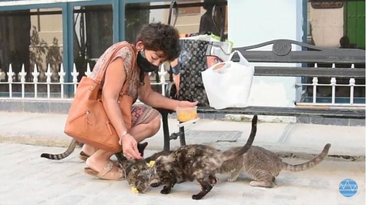 Feeding the stray dogs of Old Havana is Margarita hobby