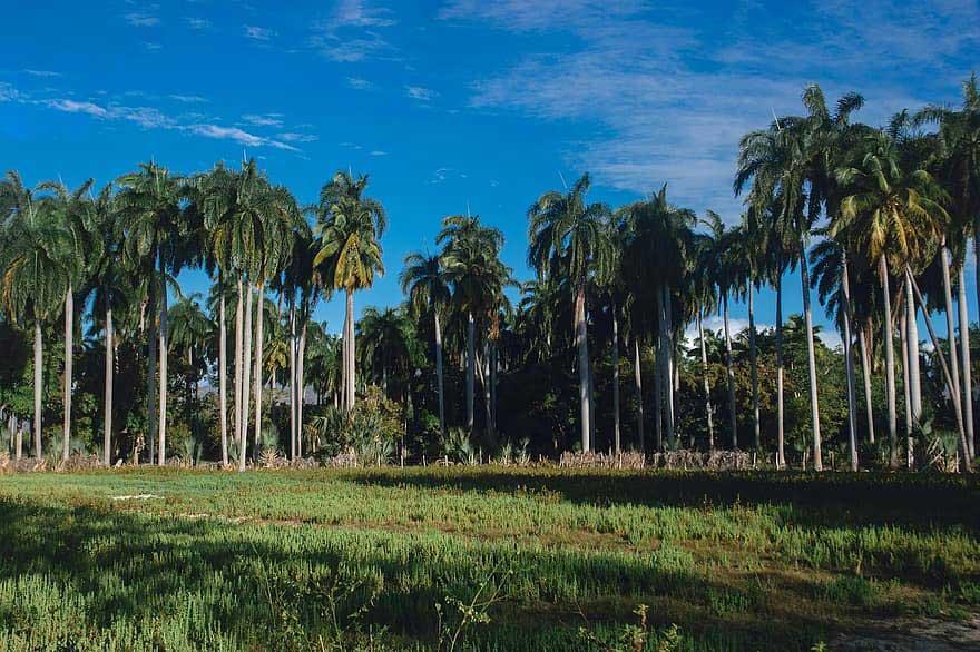 El tiempo en Cuba para el 1ro. de marzo de 2021