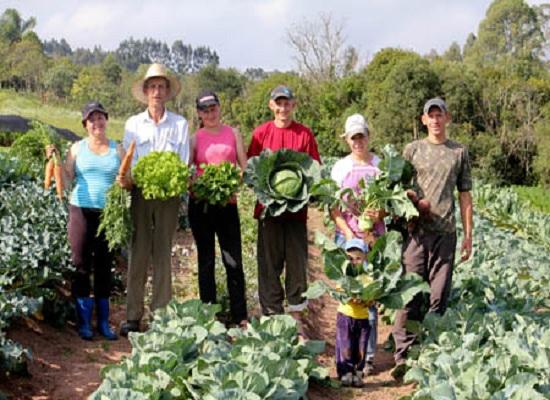 Producen desde el patio en San Nicolás