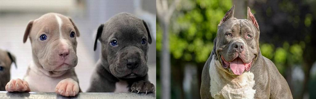 Zeus, el perro más fiero y tierno del barrio