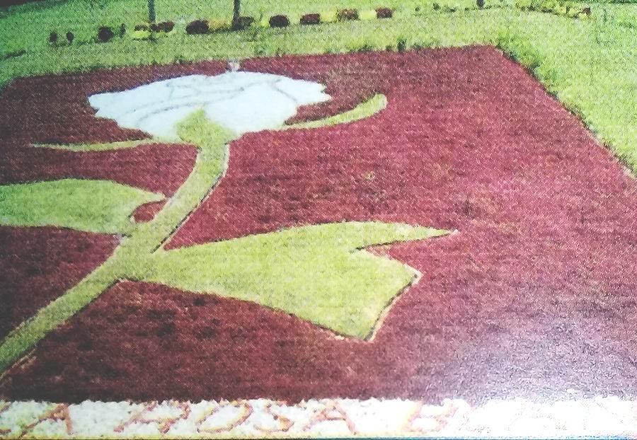 Proyecto de jardinería escultural La Rosa blanca creada por el jardinero-paisajista estadounidense Stan Herd