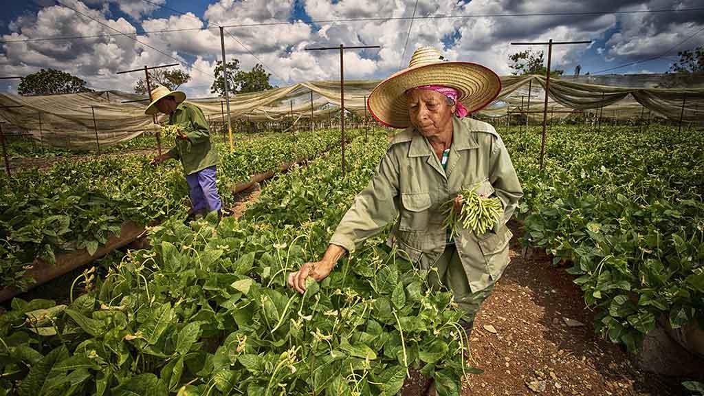 Resalta Díaz-Canel medidas para potenciar la producción de alimentos