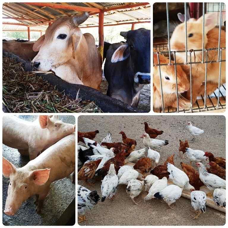 Producción de alimentos con ciencia en Camagüey