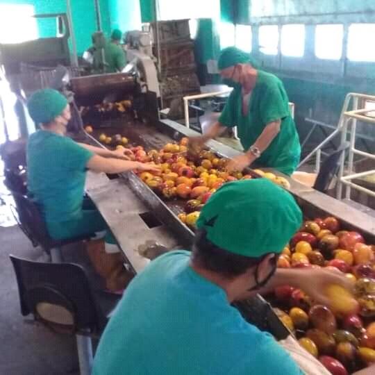 Conservas Manzanillo sustituye importaciones