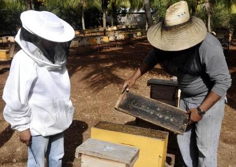 Centro de Reserva Genética Apícola La reina manzanillera. Foto: Radio Granma Digital
