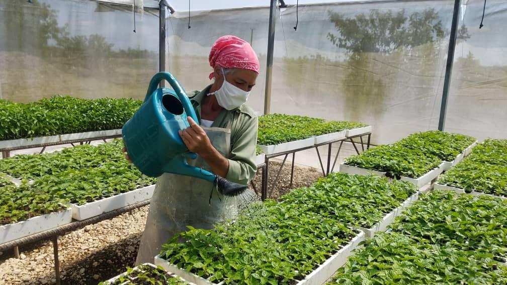 Fomenta empresa villaclareña exportación de productos agrícolas