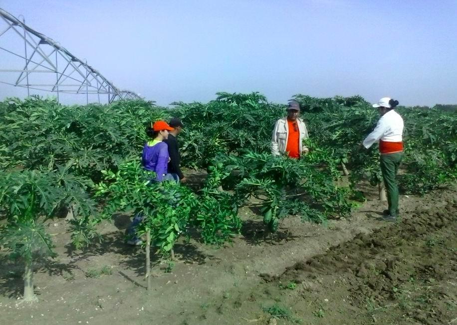 Empresa Agropecuaria de Jiguaní