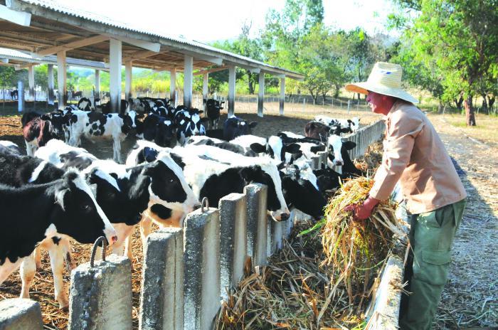 Emiten resolución que autoriza comercialización de carne bovina, leche y derivados