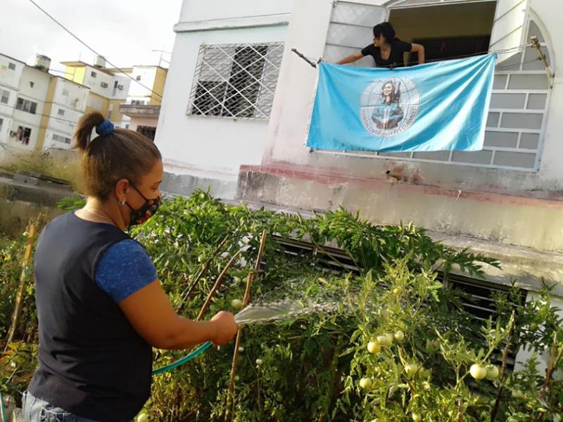 La cienfueguera Luisa no pensó que su jardín sembrado de alimentos diera tantos frutos (+Audio)