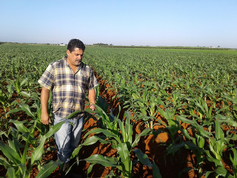 Cuba to Increase its Agricultural Grain Production