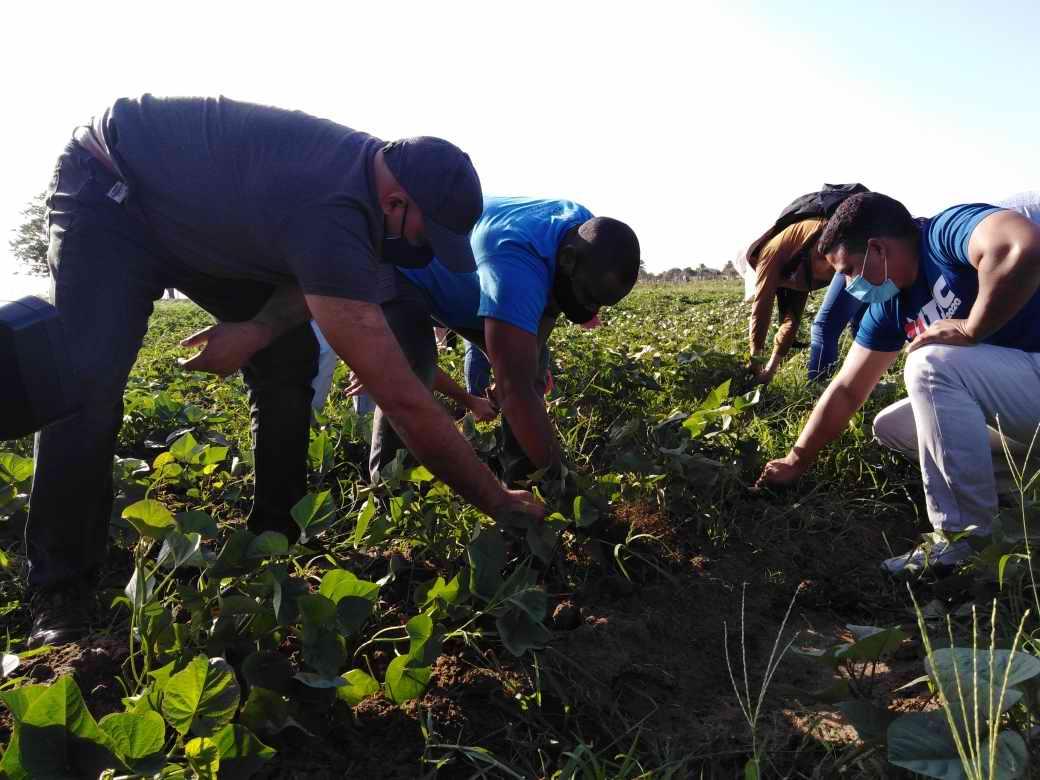 La actuación de campesinos. cooperativistas y usufructuarios definen la soberanía alimentaria