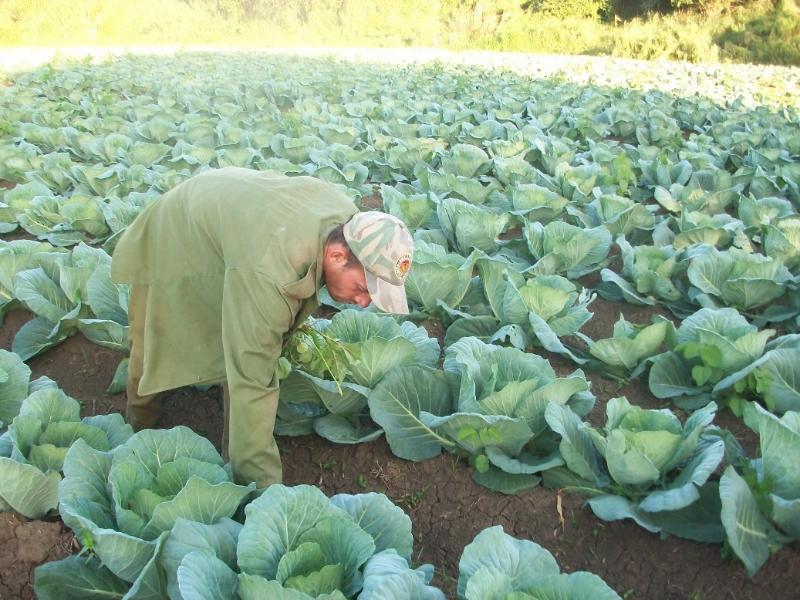 Impactos de Tarea Ordenamiento en agricultores cienfuegueros (+Audio)
