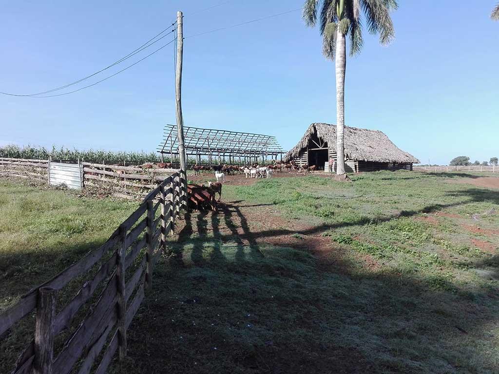 Llama Salvador Mesa en Pinar del Río a lograr sostenibilidad en las producciones agrícolas