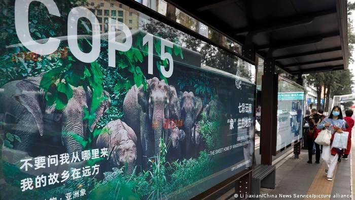 China promete crear un fondo para biodiversidad de los países en desarrollo
