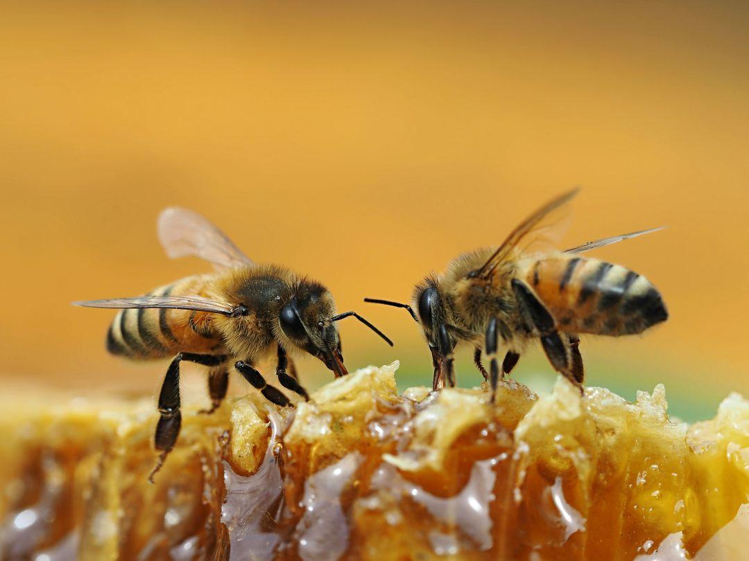 El regalo de las abejas
