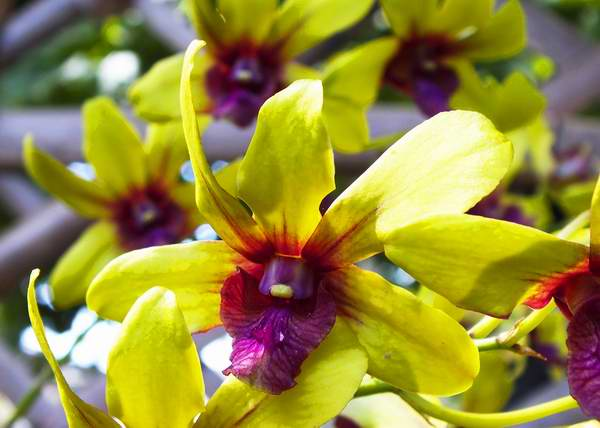 Cuban Garden Center Treasures nearly Half thousand Orchids