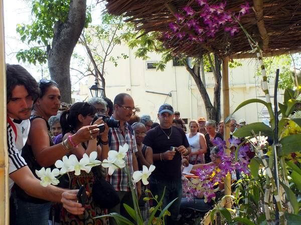 Los aficionados y público asistente participan en la tradicional exhibición de Plantas Vivas. Foto: Abel Rojas.