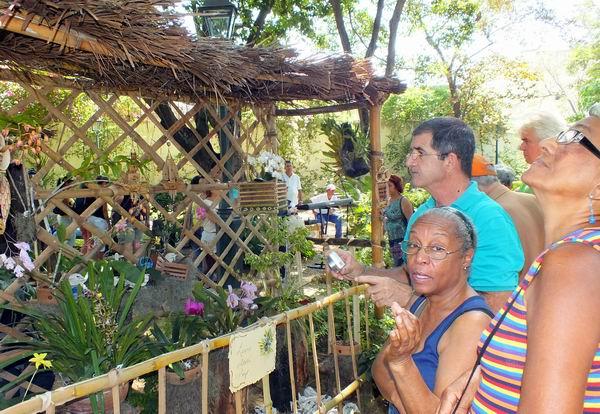 Comenzó Festival Nacional de Orquídeas en La Habana. Foto: Abel Rojas.