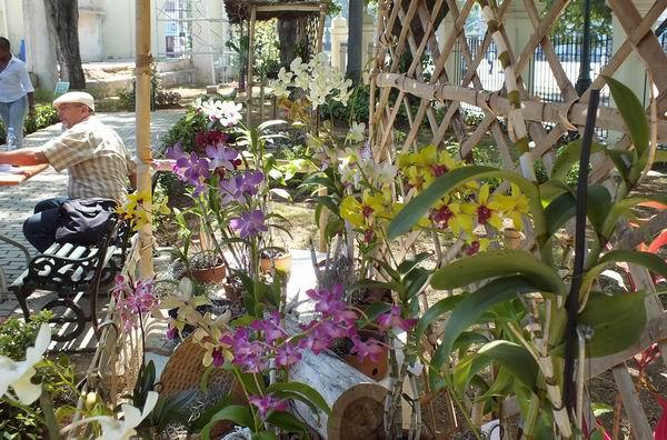 El Festival Nacional de Orquídeas sesionará hasta el próximo sábado 11. Foto: Abel Rojas