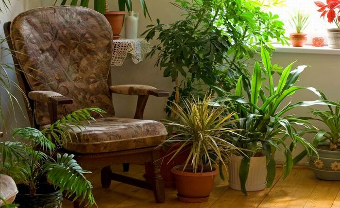 The Use of Plants for Purifying Air