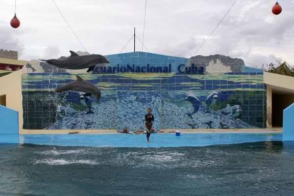 Acuario Nacional de Cuba. Foto Cubadebate