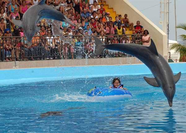 Acuario Nacional de Cuba ofrece el tradicional espectáculo de delfines. Foto Tribuna de La Habana