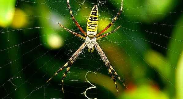 Las arañas atraen a sus víctimas con patrones decorativos