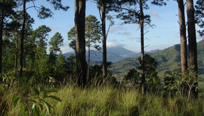 Celebran su día trabajadores forestales de Pinar del Río
