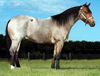 Cuarto de milla: caballos que ayudan a los niños