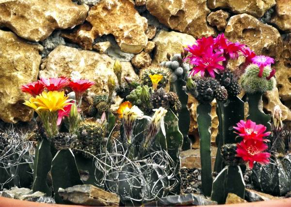 Festival Nacional de Cactus y Suculentas 2013. Foto: Abel Rojas.