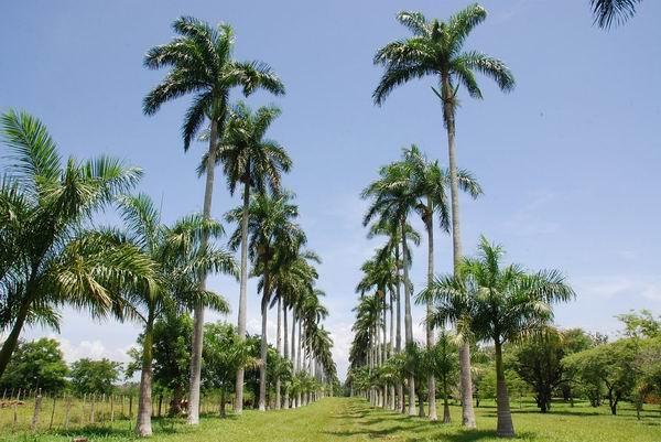 En cienfuegos el m s longevo jard n bot nico for Centro de eventos jardin botanico