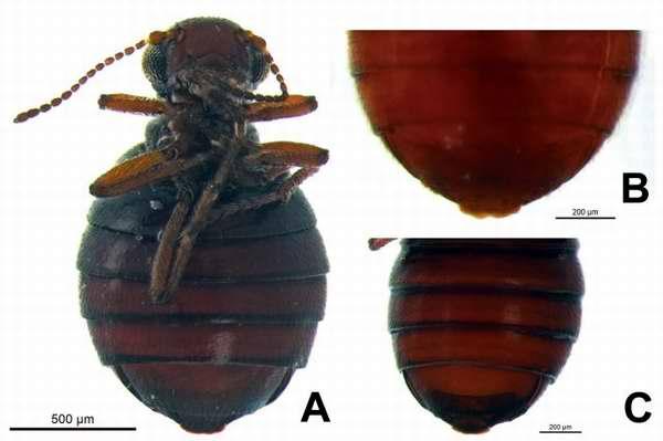 Descubren nueva especie de insecto en Alaska