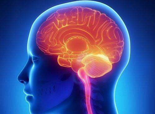Dan a conocer cómo el cerebro se programa para quemar la grasa del cuerpo