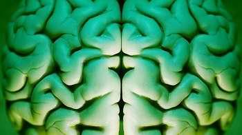 Las personas sociables tienen el cerebro más grande