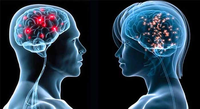 Demuestran cómo funciona el cerebro de los bilingües