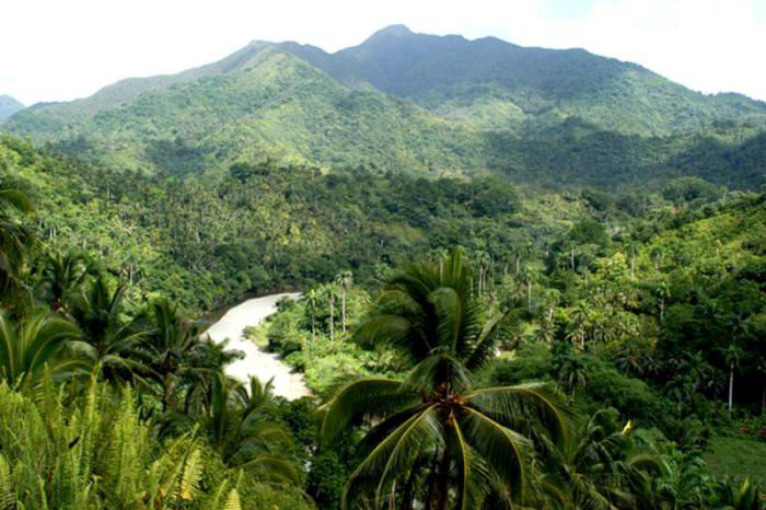 Cuba Fulfills Its Commitments on its Forested Surface