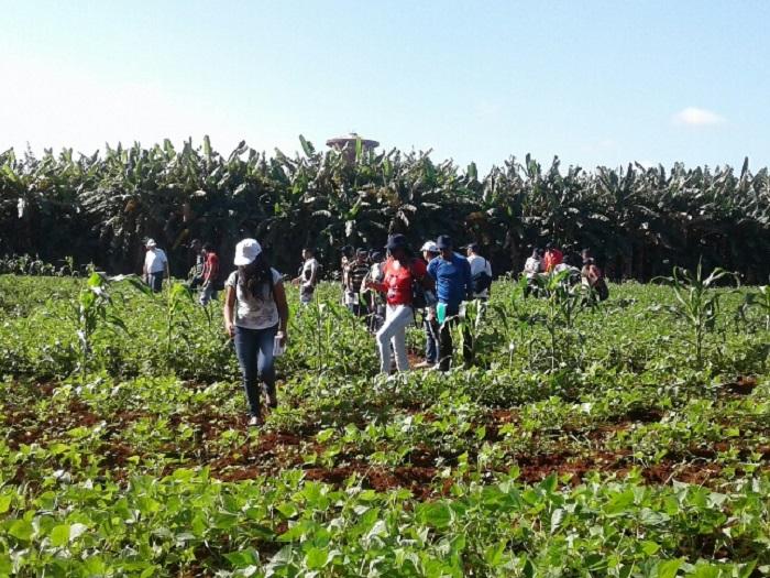 Analizan producción agraria en Congreso de las Ciencias Agrícolas