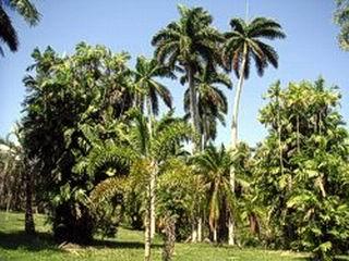 Colección de palmas en el Jardín Botánico de Cienfuegos. Foto: Mireya Ojeda