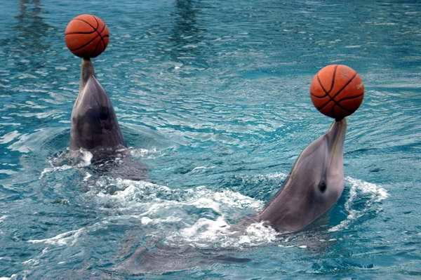Acuario Nacional de Cuba: diversión con delfines garantizada. Foto Cubadebate
