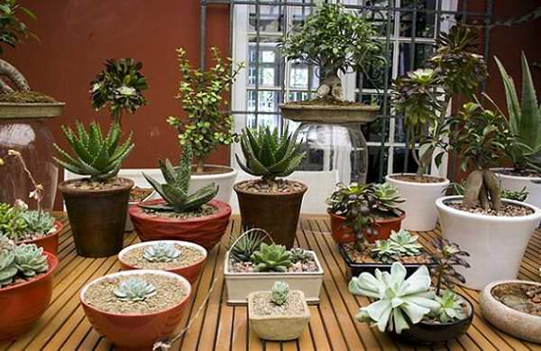 Comprueban que la decoraci n con plantas puede ayudar a for Decoracion con plantas