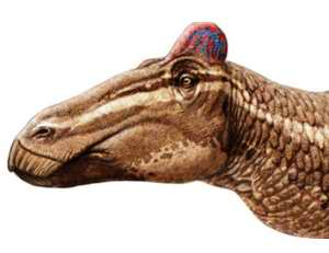 Hallan un dinosaurio de pico de pato con cresta de gallo