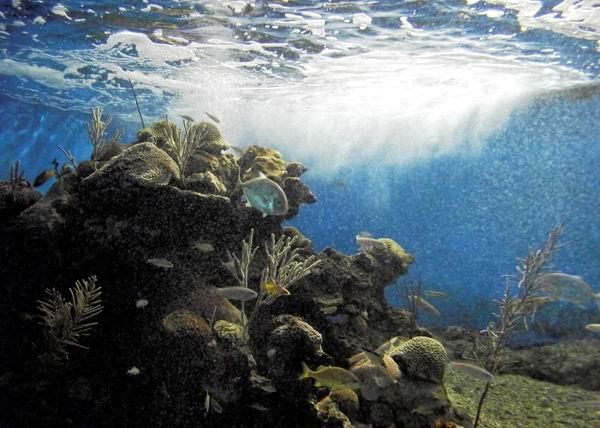 Cuba y Francia promueven colaboración en ciencias marinas. Foto: Abel Rojas