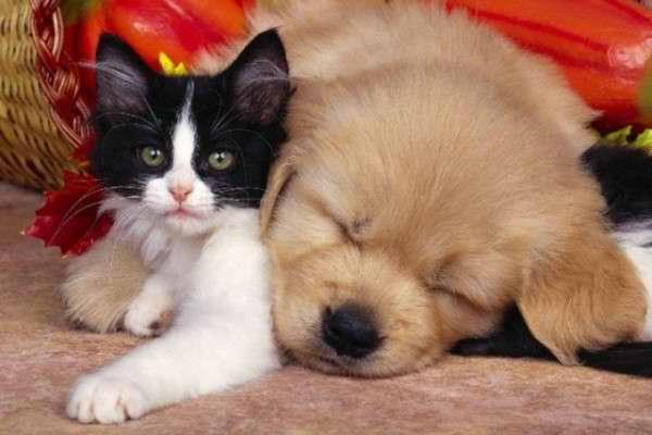 Los perros tienen el cerebro más grande que los gatos