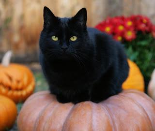 Gatos negros afectan más a las personas alérgicas
