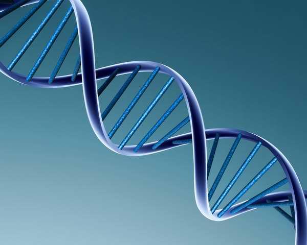 ADN y envejecimiento humano